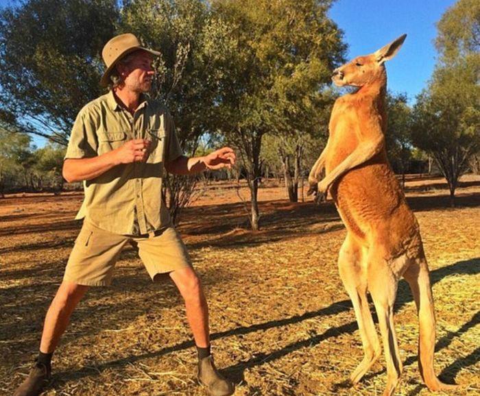 Любопытные факты об Австралии, которые не оставят равнодушным