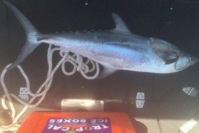 Макрель чуть не убила рыбачку из Австралии