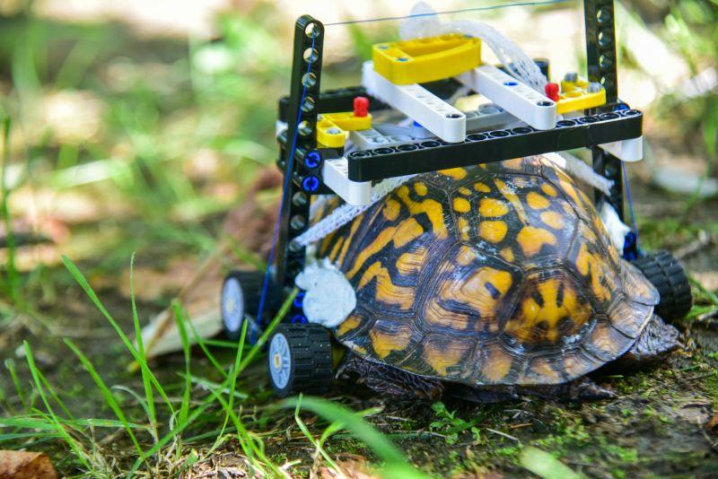 Инвалидное кресло-коляска для черепахи из конструктора LEGO