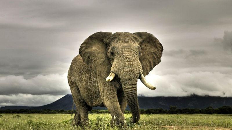 10 опаснейших животных нашей планеты