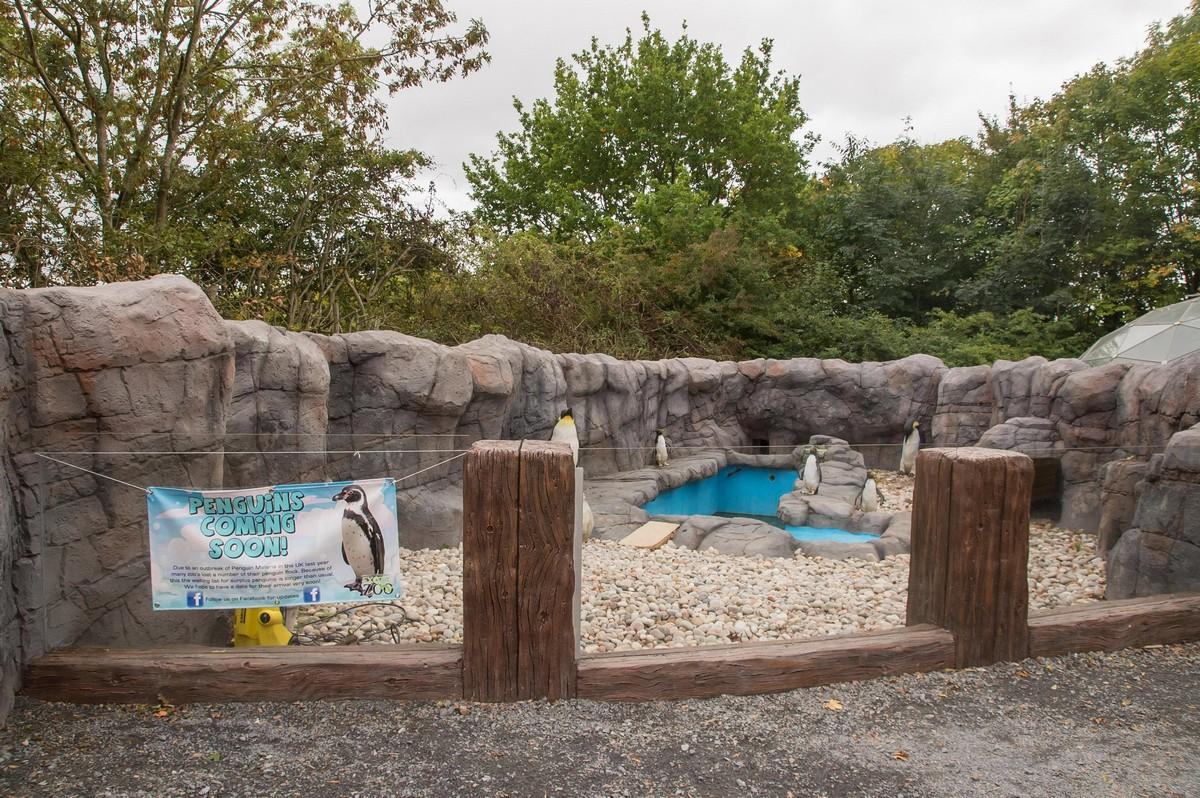 Британский зоопарк заселил пингвинарий пластиковыми птицами