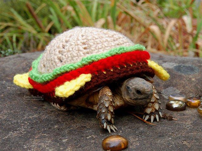 Черепашкам должно быть тепло в прохладную погоду
