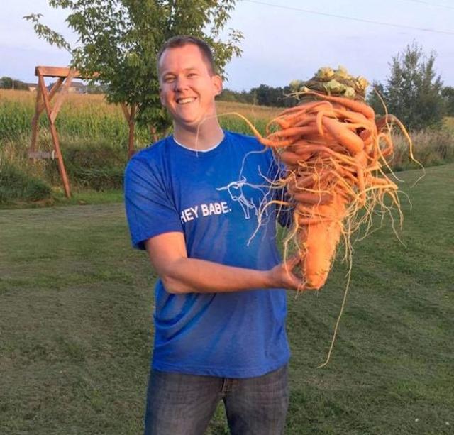 Морковь попала в книгу рекордов Гиннесса