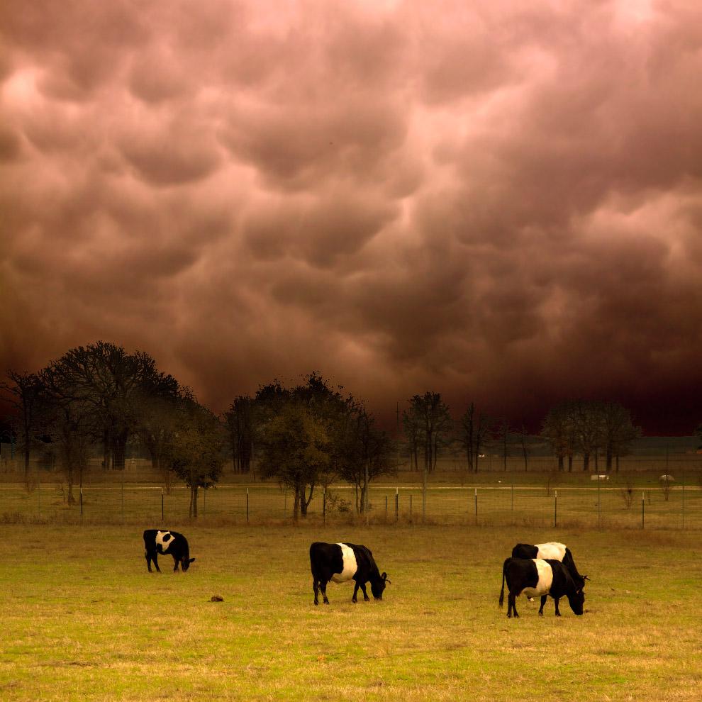 Поразительные вымяобразные облака Mammatus