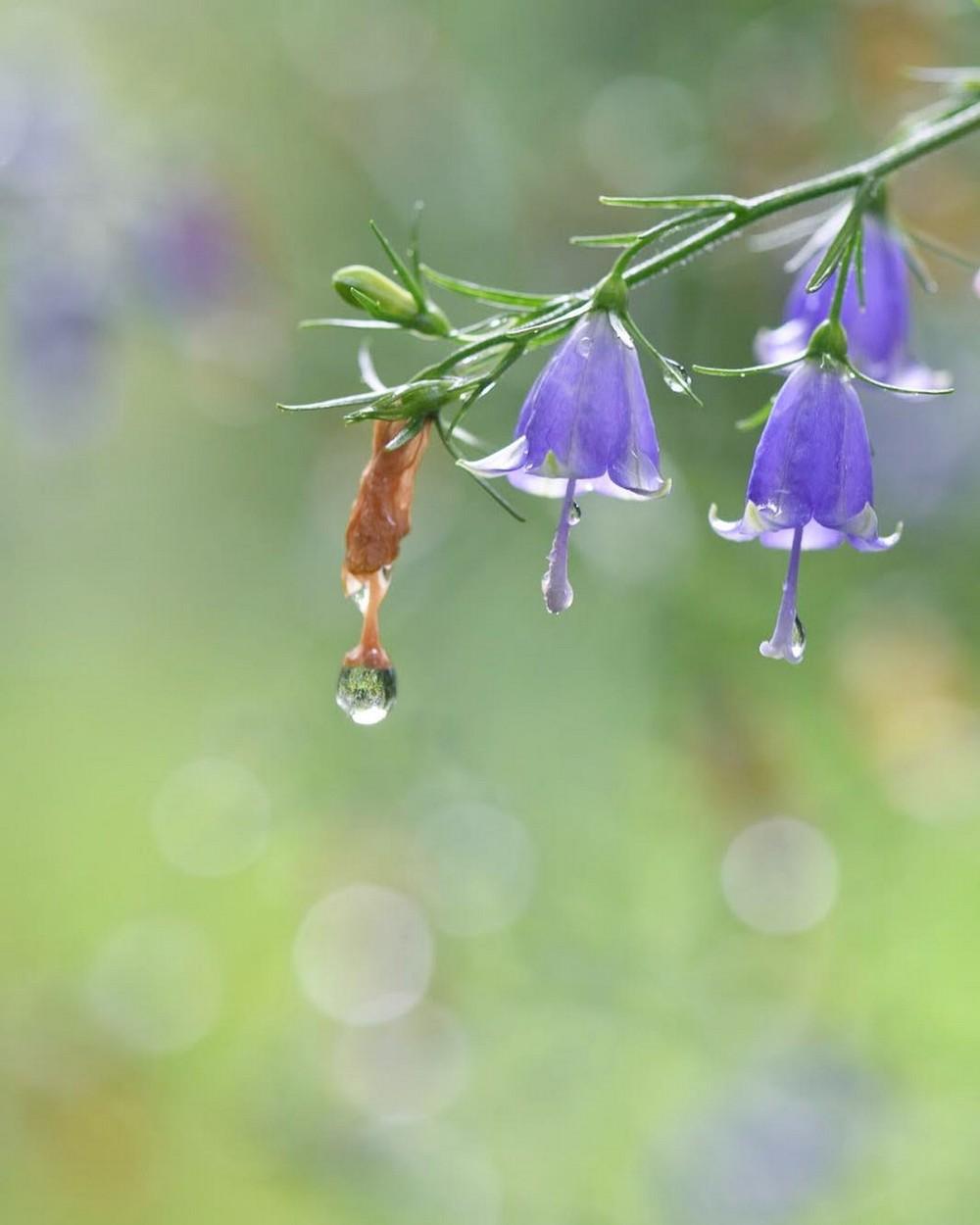 Растения, цветы и насекомые на снимках Каору Тай