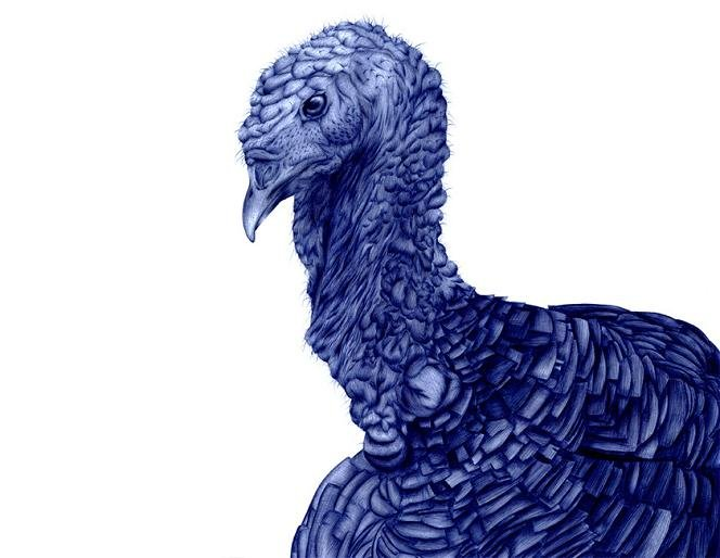 Гиперреалистичные рисунки шариковой ручкой от Сары Эстейе