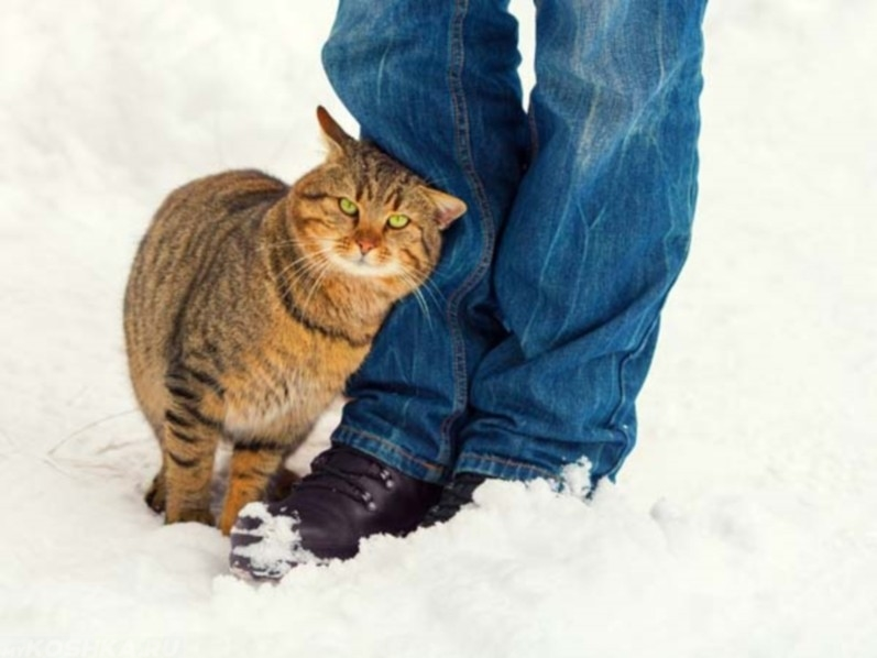 Почему не стоит отгонять кошек, когда они трутся об тебя