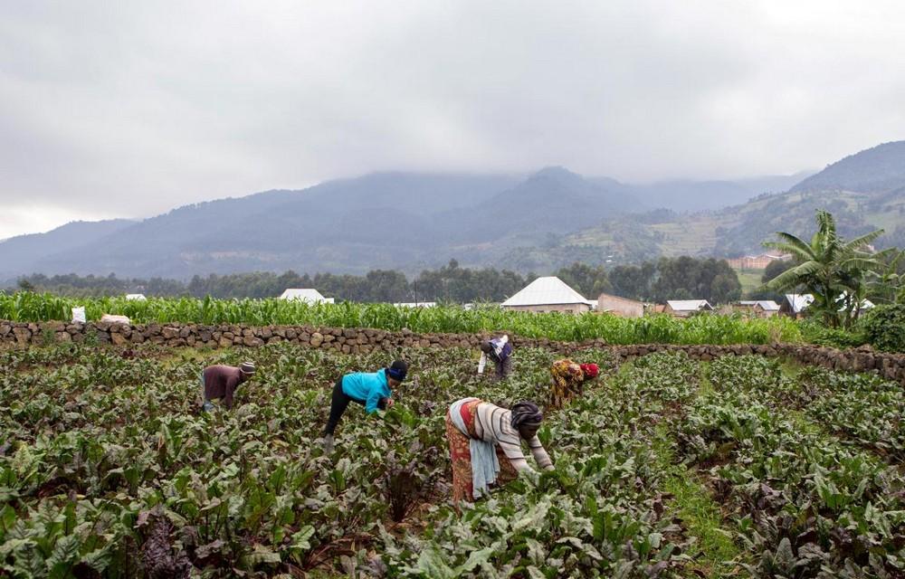 Африканская фермерша делает вино из свеклы