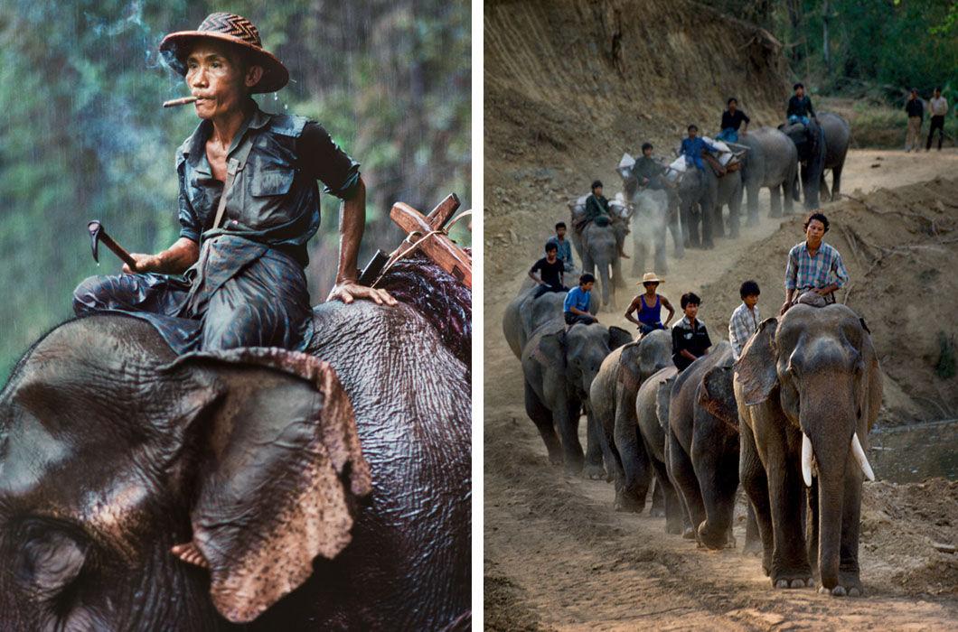 Отношения слона и человека в фотографиях