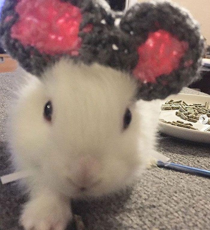 Вязаные уши для крольчихи
