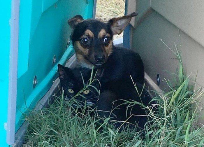 Бездомные кот и собака вместе спасались от холода и попали в приют