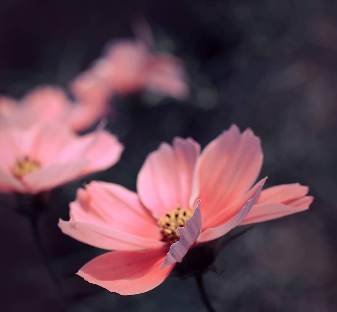 Фотографии цветов от Рэнди Нюстрём