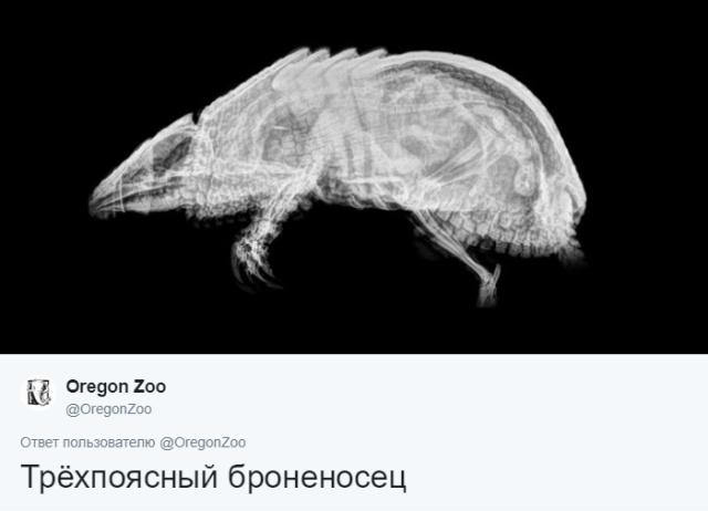 Интересные рентгеновские снимки различных животных