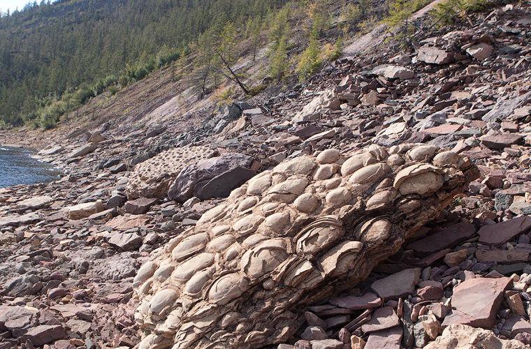 Строматолиты - живые камни