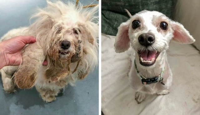Животные, которые нашли новый дом: до и после