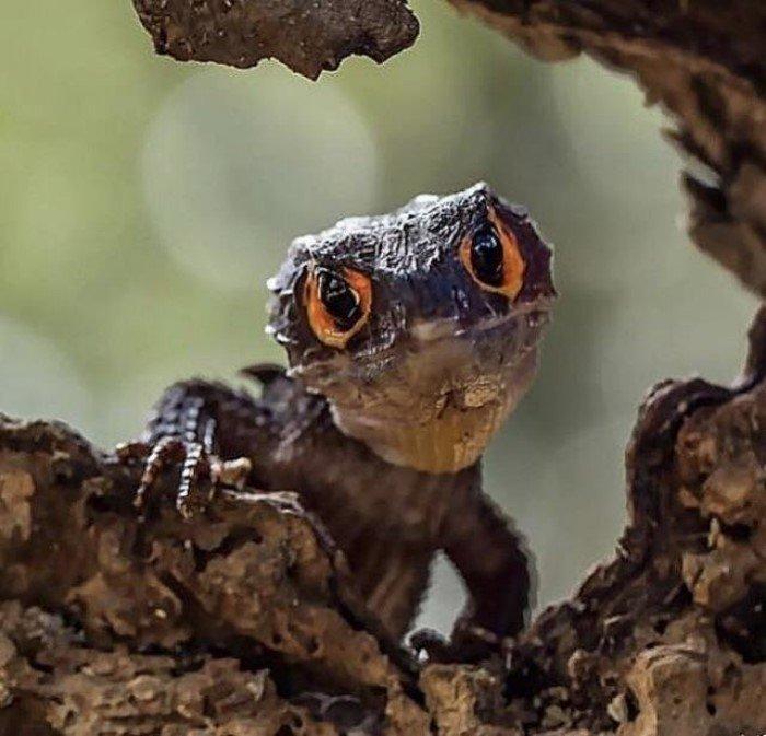18 необычных живых существ, любоваться которыми немного страшно