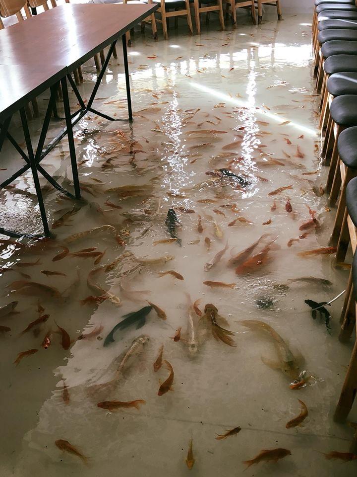 Кафе с затопленным полом и рыбами у ног посетителей