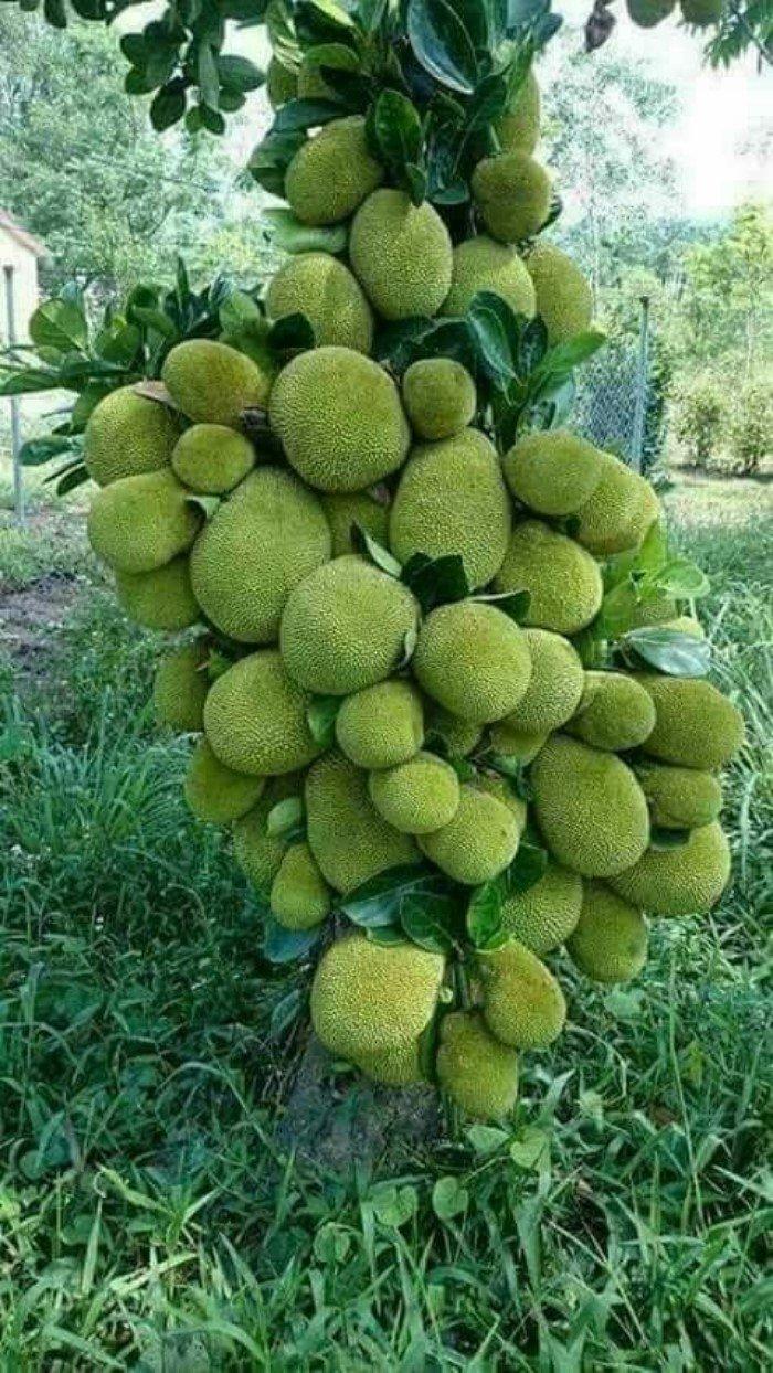 Невероятное плодовое изобилие на фото