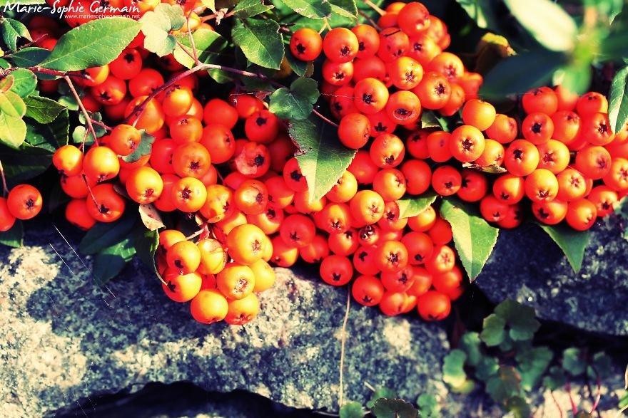 Прекрасная осень в этом году на снимках жительницы Дании