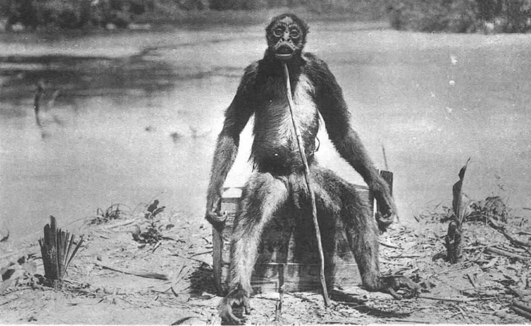 Мифические животные, в которых верили наши предки