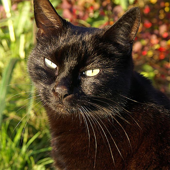 Почему котов не любили в Средневековье?