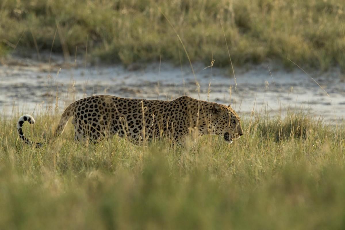 Удивительные снимки животных от Чарльза Райана