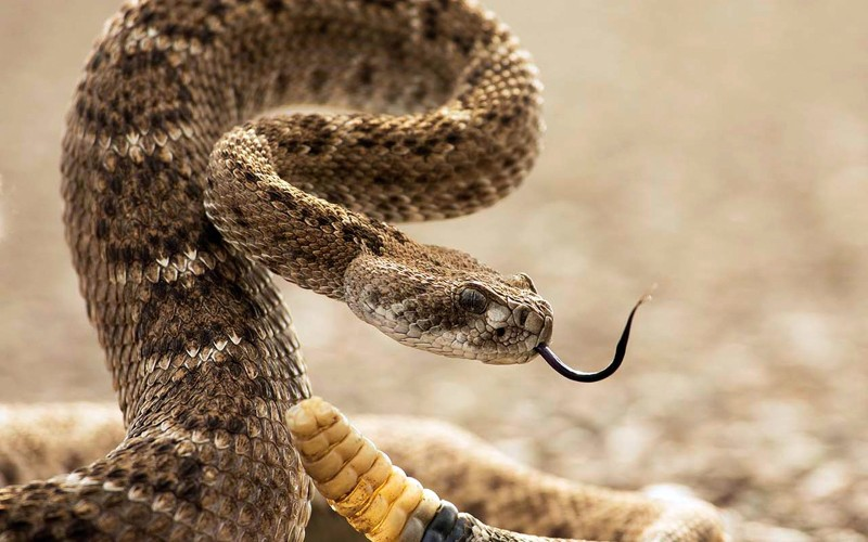 10 распространенных мифов о змеях