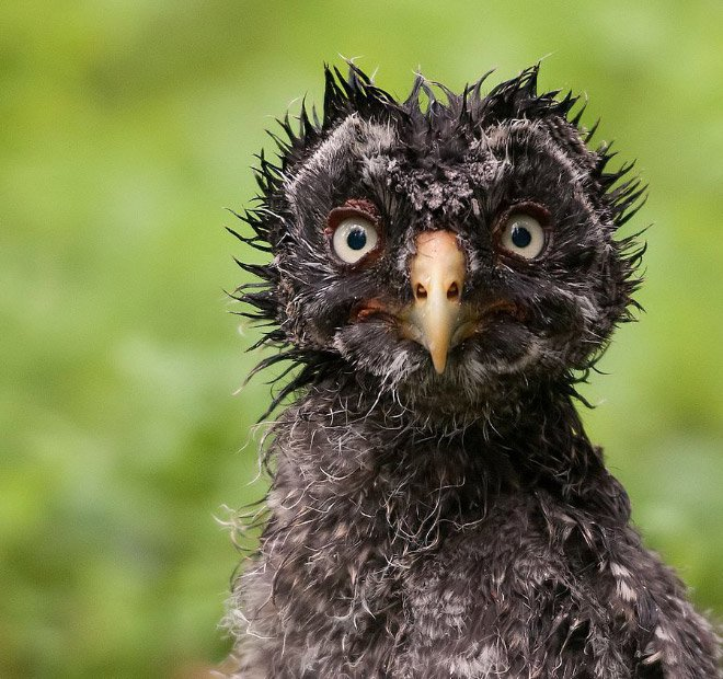 Мокрые совы, которых хочется согреть