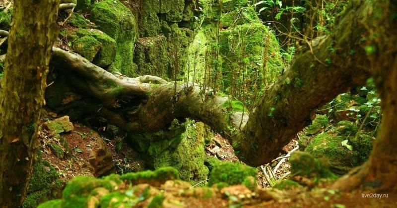 Волшебный лес Пазлвуд в Великобритании, которым вдохновлялся Толкиен