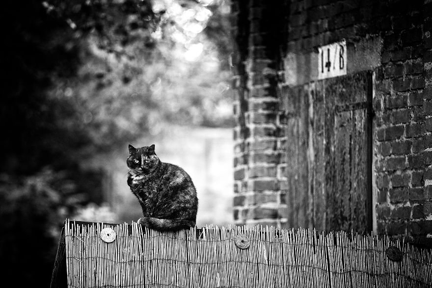 Монорельсовые кошки на снимках от Сабрины Боем