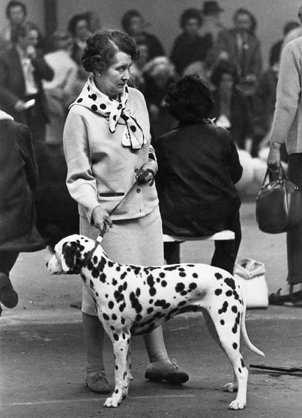 Трогательные винтажные кадры с собачьих выставок 60-70 годов