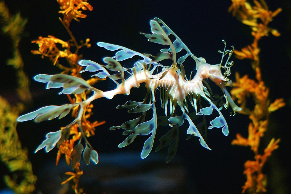 10 самых необычных океанских рыб
