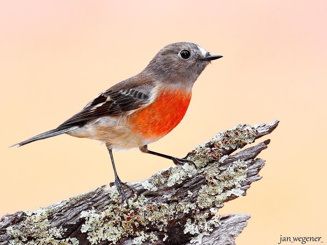 Яркие снимки птиц от Яна Вегенера
