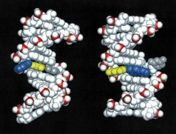 14 интересных фактов о ДНК