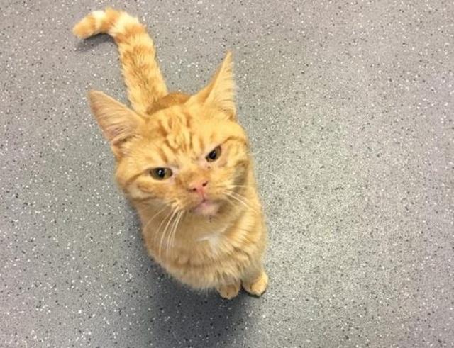 Кот Сол - самый суровый кот интернета