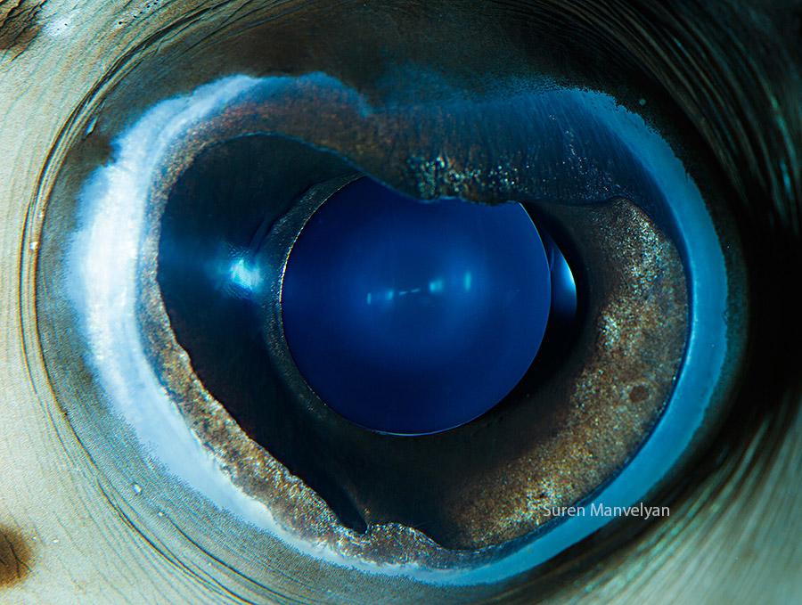 Глаза рыб и пресмыкающихся от Сурена Манвелян
