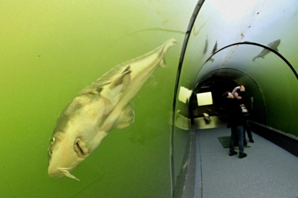 Туннель под озером в Чехии