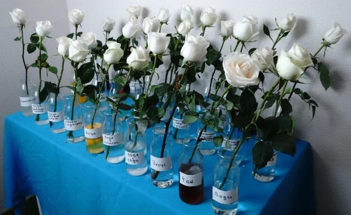 Необычные способы сохранить розы дольше