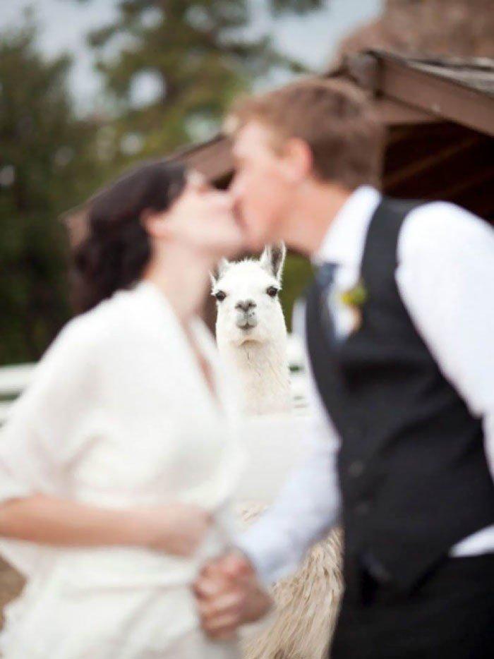 30 запоротых свадебных фото