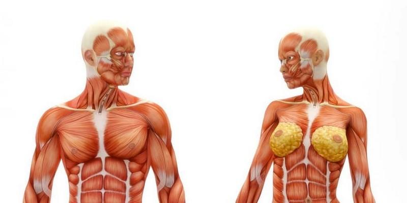 Функции организма, которые продолжают работать после смерти