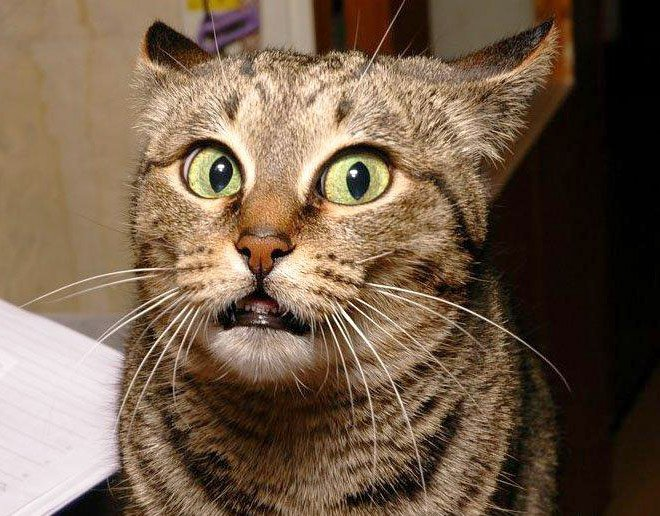 Максимально удивленные коты