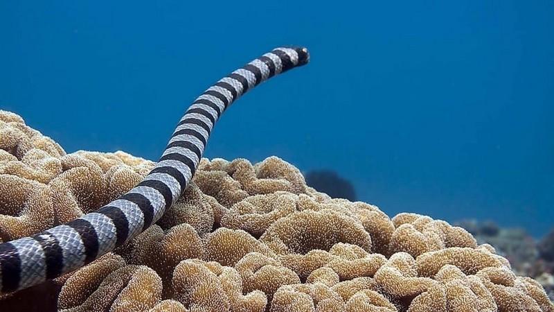 10 самых опасных змей, с которыми лучше не встречаться