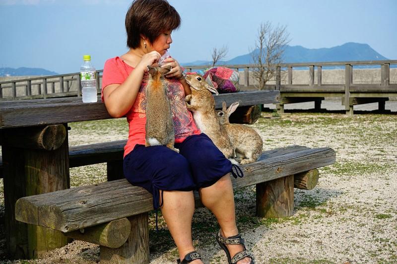 Кроличий рай на острове Окуносима в Японии