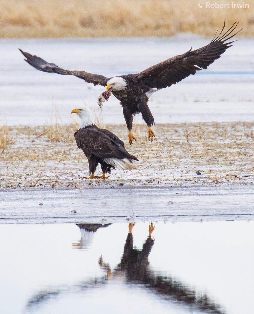 14-летний сын Стива Ирвина делится потрясающими фотографиями дикой природы