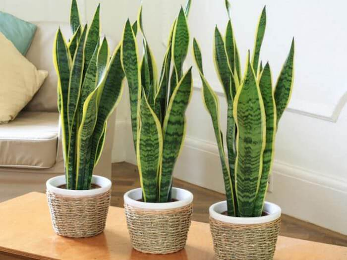 5 растений, которые помогут против бессонницы