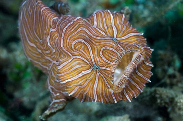 Интересные обитатели морских глубин нашей планеты