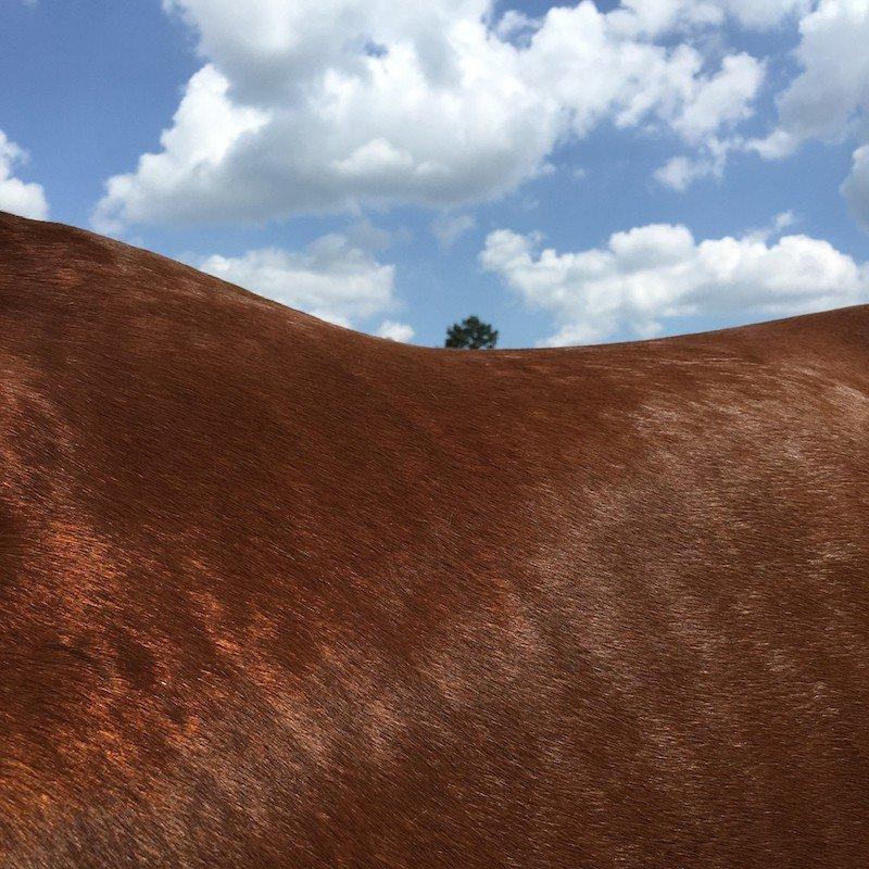 Лошади от Ли Дейгард, которых сразу и не разглядишь