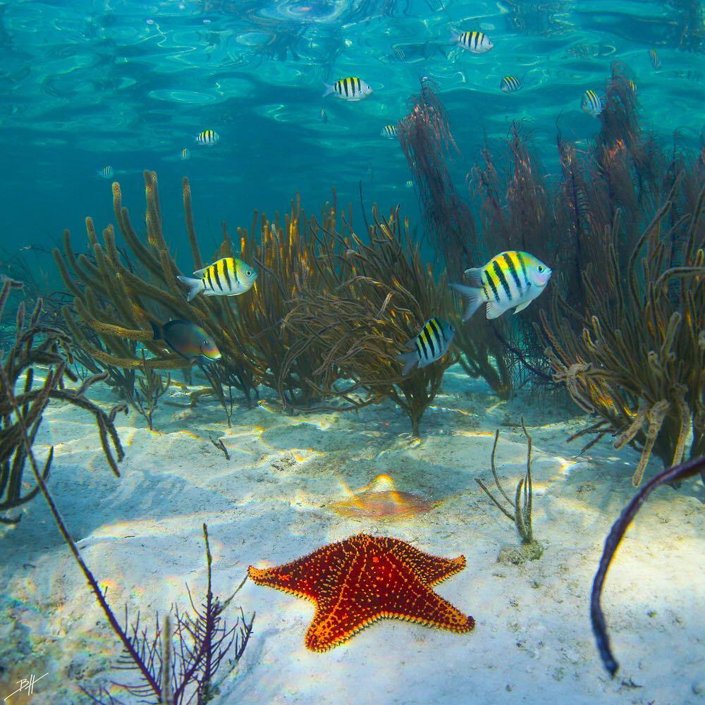 Красота подводный мир картинки жаворонки обитают