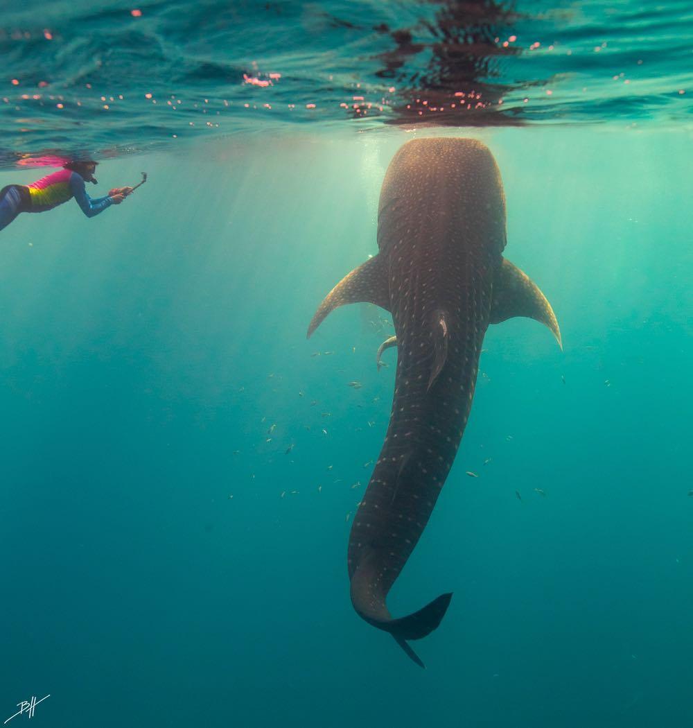 Красота подводного мира на снимках Бена Хикса