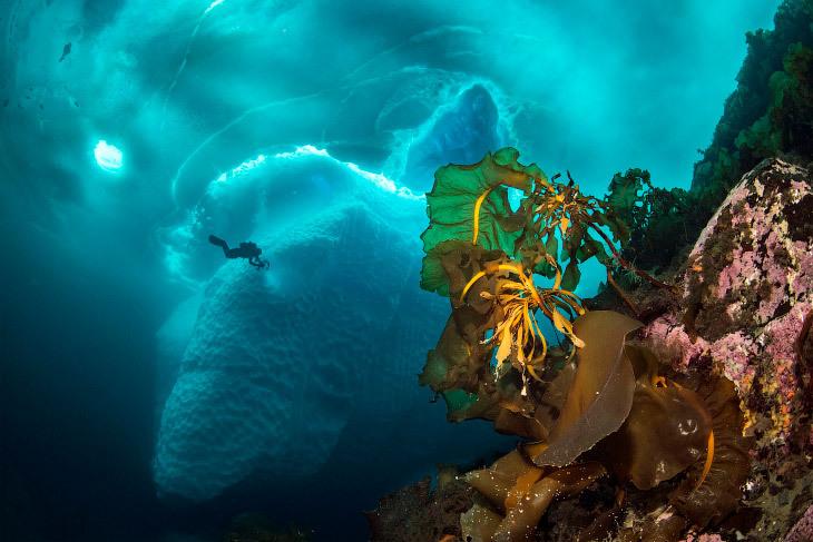 Айсберги под поверхностью океана